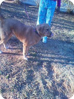 Golden Retriever Mix Dog for adoption in Winder, Georgia - *Shea