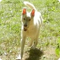 Adopt A Pet :: Tundra ADOPTED!! - Antioch, IL