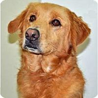Adopt A Pet :: Jessie - Port Washington, NY