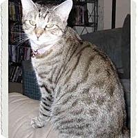 Adopt A Pet :: Janis - Catasauqua, PA