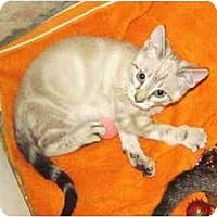 Adopt A Pet :: White Birch - Colmar, PA