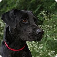 Adopt A Pet :: *Matt - PENDING - Westport, CT
