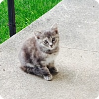 Adopt A Pet :: Aggie - Troy, OH