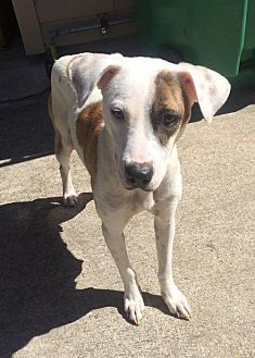 Terrier (Unknown Type, Medium) Mix Dog for adoption in Slidell, Louisiana - Annie
