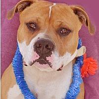 Adopt A Pet :: Tyler - Littlerock, CA