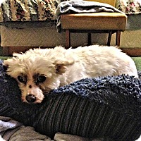 Adopt A Pet :: Sweetie - Rutherfordton, NC