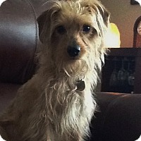 Adopt A Pet :: Mickey - Toledo, OH