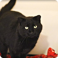 Adopt A Pet :: Pella - Lincoln, NE