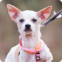 Adopt A Pet :: Lillian Kaushtupper - Redmond, WA