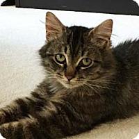 Adopt A Pet :: Charlie - Merrifield, VA