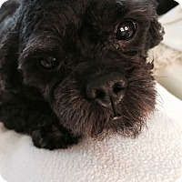 Adopt A Pet :: Eddie - Long Beach, NY