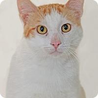 Adopt A Pet :: Uhtred - Encinitas, CA