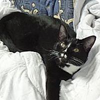 Adopt A Pet :: Otis - Riverside, RI