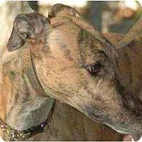 Adopt A Pet :: Square - Orange County, CA