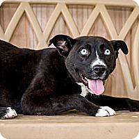 Adopt A Pet :: Koda - Gadsden, AL