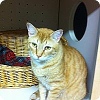 Adopt A Pet :: Puddin - Rock Hill, SC