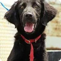Adopt A Pet :: Cabella - Largo, FL