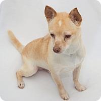 Adopt A Pet :: Cracker Jack - Cumberland, MD
