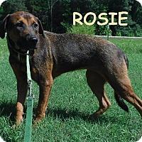 Adopt A Pet :: Rosie - Batesville, AR