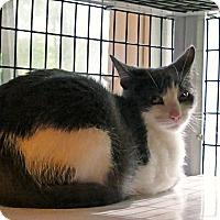 Adopt A Pet :: Jennie - Victor, NY