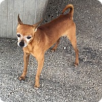 Adopt A Pet :: Bendito - Key Biscayne, FL