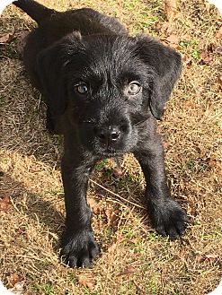 Terrier (Unknown Type, Medium) Mix Puppy for adoption in Acworth, Georgia - Luxe