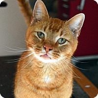 Adopt A Pet :: Gulliver - Richmond, VA