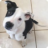 Adopt A Pet :: Cheech - Dallas, GA