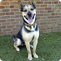 Adopt A Pet :: Belvedere - Germantown, TN
