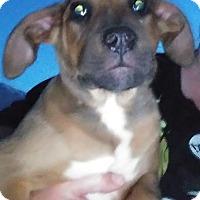 Adopt A Pet :: Odin - Ogden, UT