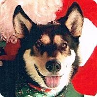 Adopt A Pet :: Darla - Lake Forest, CA