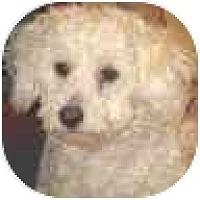 Adopt A Pet :: Billy - La Costa, CA