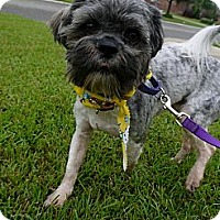 Adopt A Pet :: Jonesy - Baton Rouge, LA