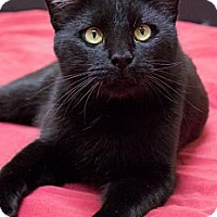 Adopt A Pet :: Salem - Chicago, IL