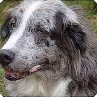 Adopt A Pet :: Martin - Orlando, FL