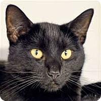 Adopt A Pet :: Barnaby - Lancaster, MA