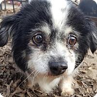 Adopt A Pet :: Winnie - Memphis, TN