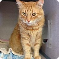 Adopt A Pet :: Cheddar - Orange, CA