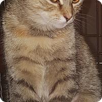 Adopt A Pet :: Kiki - brewerton, NY
