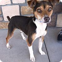 Adopt A Pet :: Twix - Artesia, NM