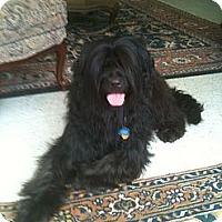 Adopt A Pet :: VALENTINO - Houston, TX