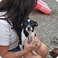 Adopt A Pet :: Manny - West Hartford, CT
