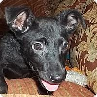 Adopt A Pet :: Eddie - Londonderry, NH