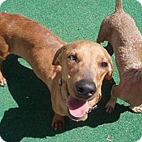 Adopt A Pet :: Ruger - Atascadero, CA