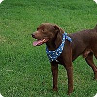 Adopt A Pet :: Junior - Glastonbury, CT