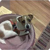 Adopt A Pet :: JILLIAN - Scottsdale, AZ