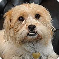 Adopt A Pet :: Eli - Milan, NY