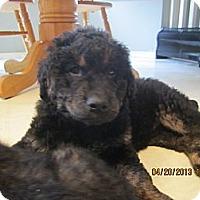 Adopt A Pet :: Heidi - Surrey, BC