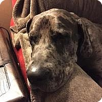 Adopt A Pet :: Rigbee - Phoenixville, PA