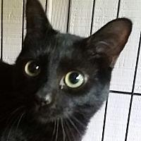 Adopt A Pet :: Raven - Ocala, FL